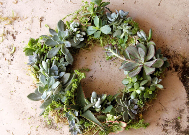 hgtv craft succulent wreath