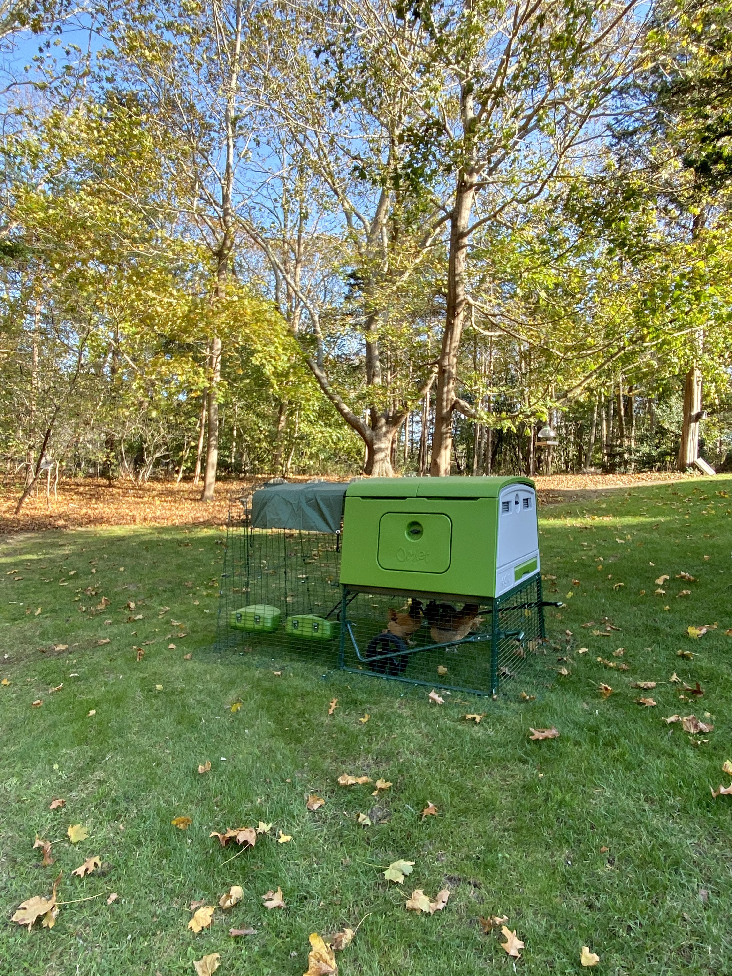 Omlet Cube chicken coop with pullets
