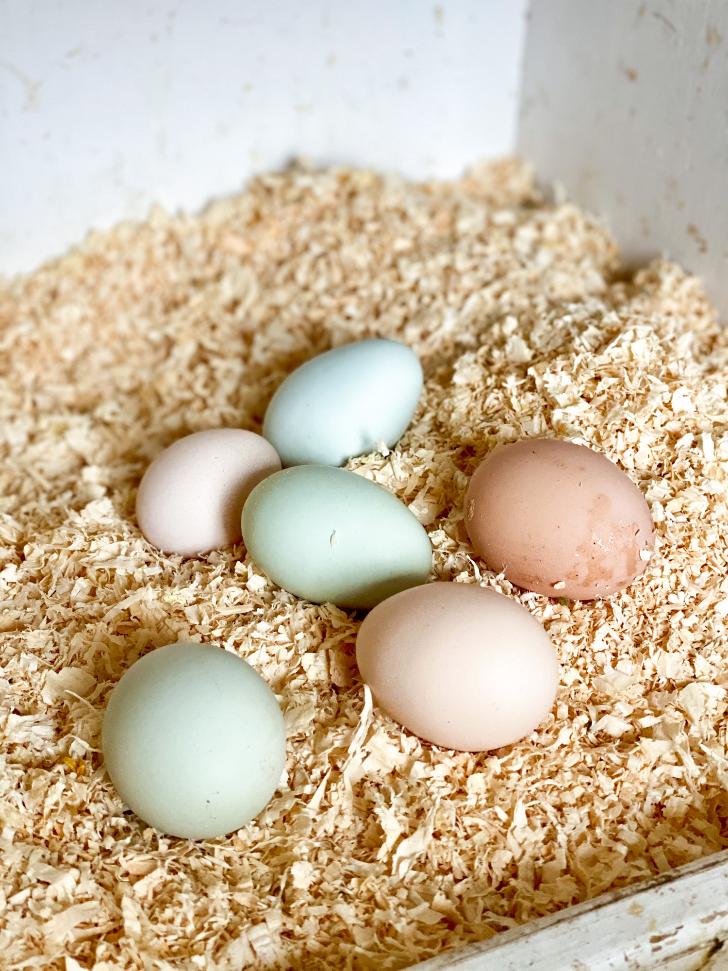 Eggs in nesting box are a welcomed silver lining