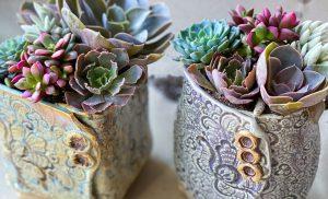 create a succulent planter