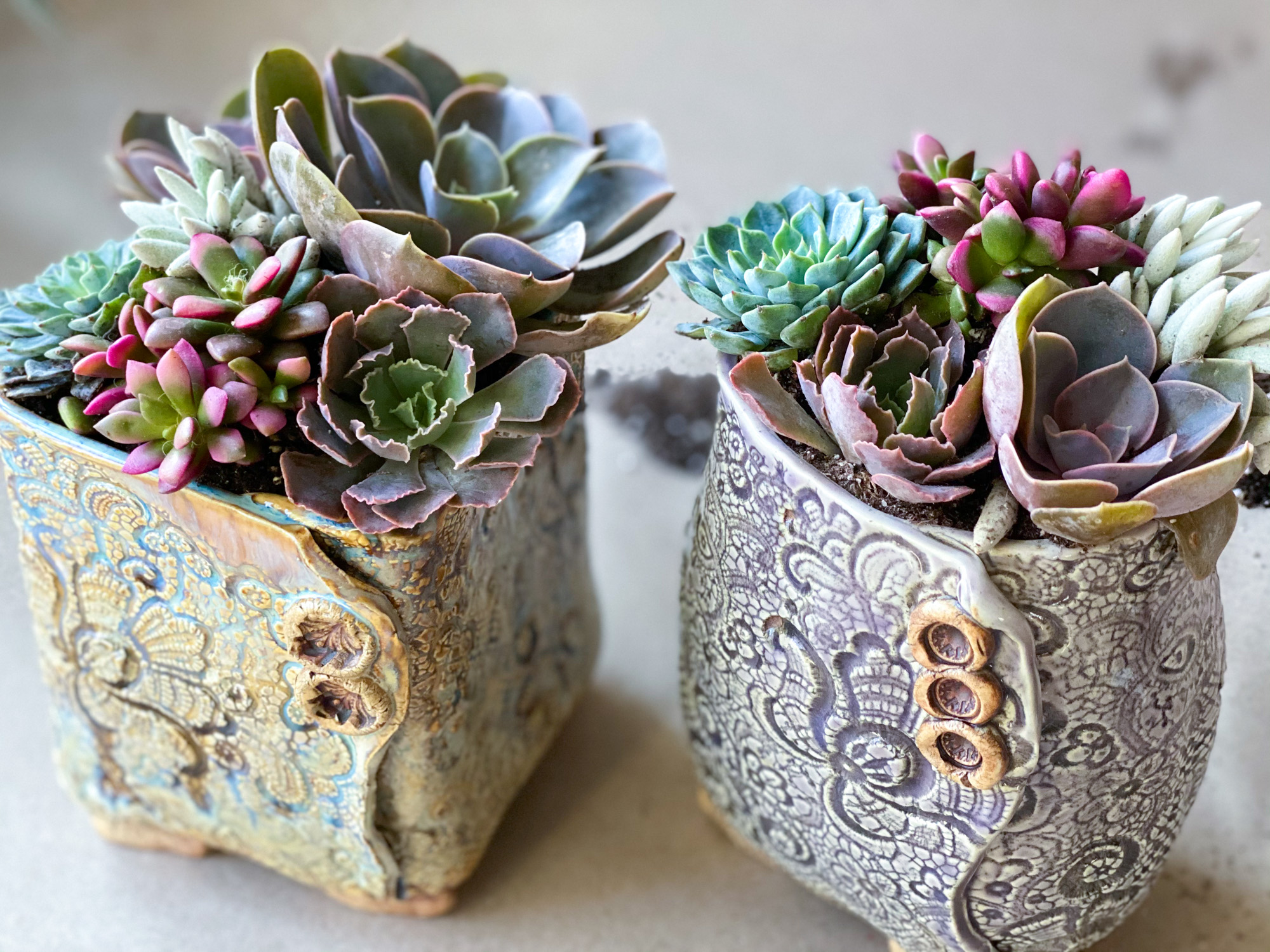 Diy Gift How To Create A Succulent Planter Tilly S Nest