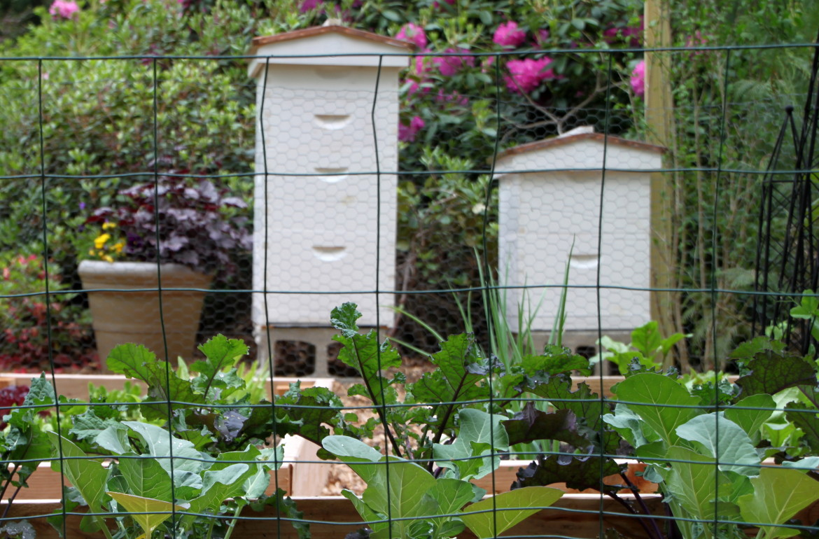HGTV-MCaughey-beehives near vegetable garden