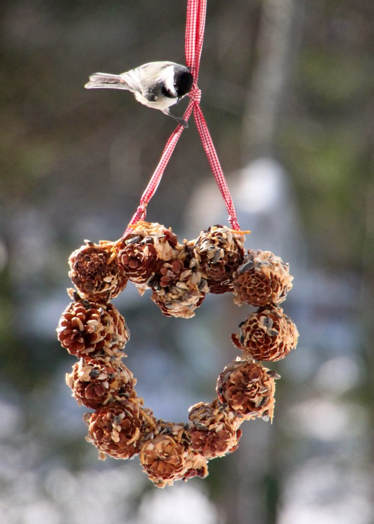 valentine for birds