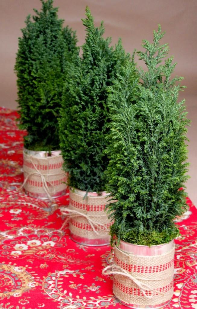cypress holiday trees