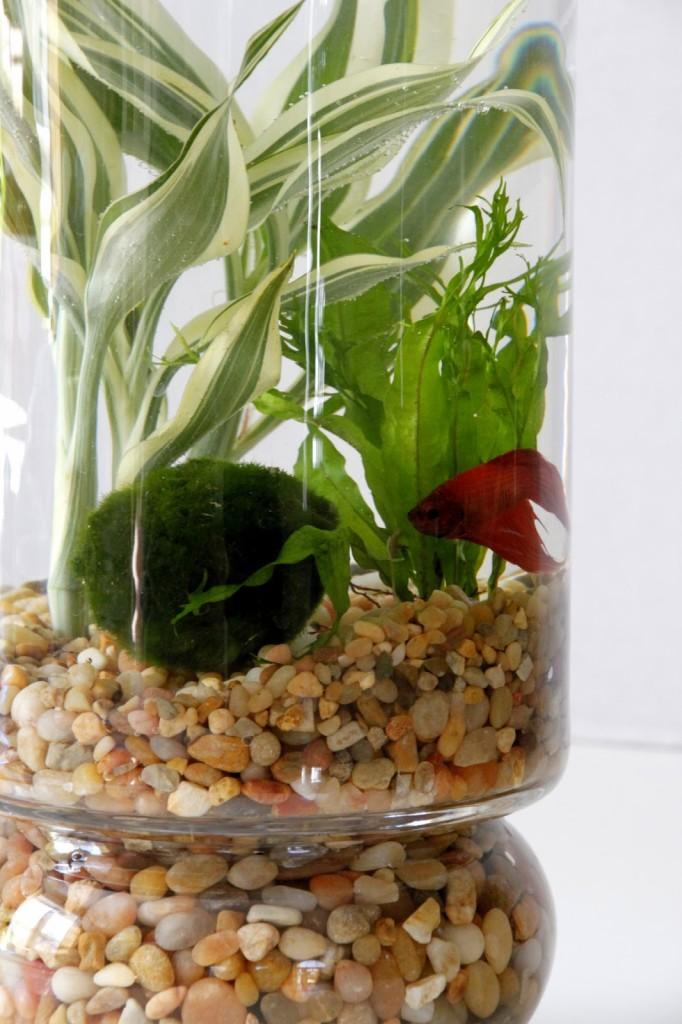 Diy indoor water garden tilly 39 s nest for Outdoor aquatic plants