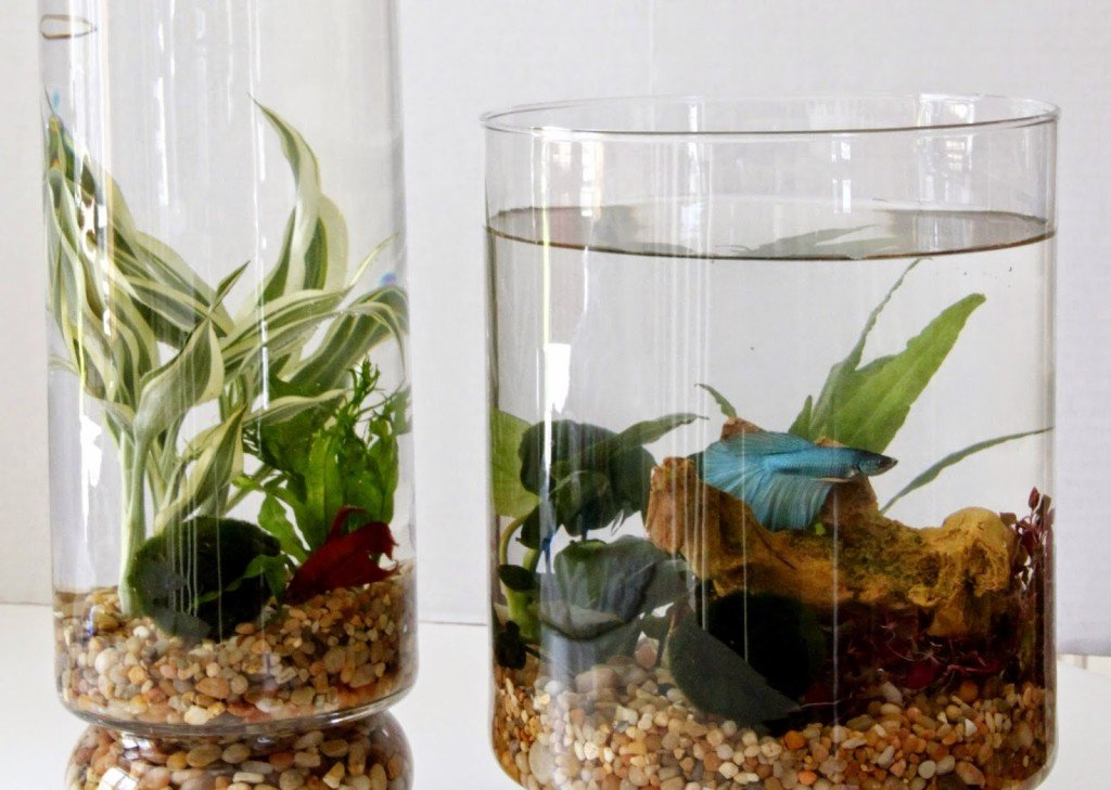 DIY: Indoor Water Garden