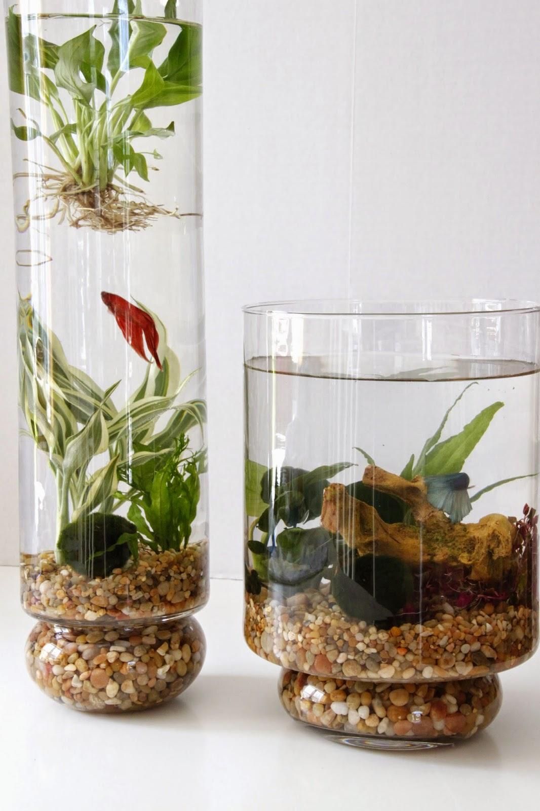 Diy indoor water garden tillys nest reviewsmspy