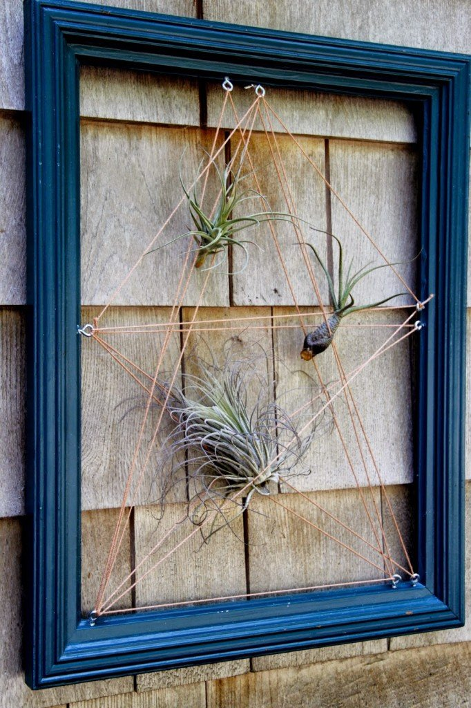 airplant wall art
