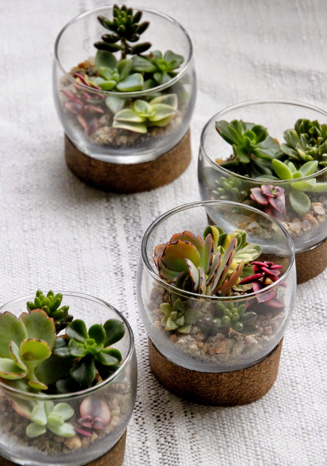 tiny succulent terrarium place settings tilly 39 s nest. Black Bedroom Furniture Sets. Home Design Ideas