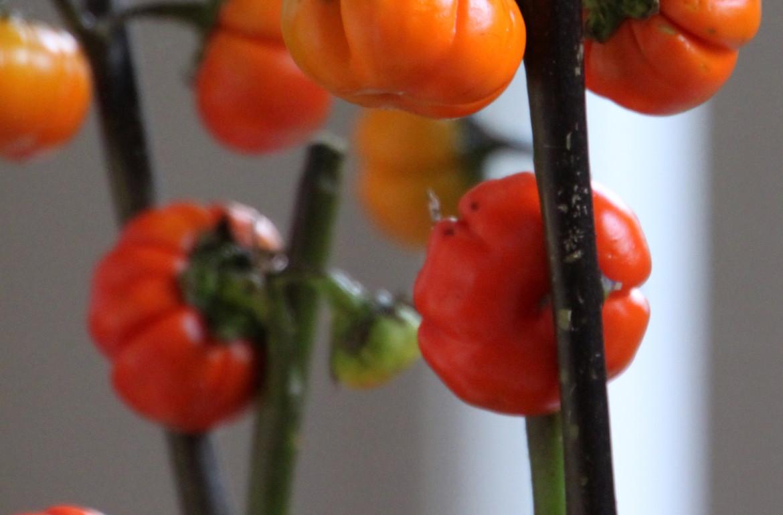 HGTV-MCaughey-pumpkinbouquet5