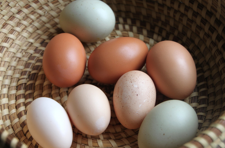 HGTV_assorted eggs