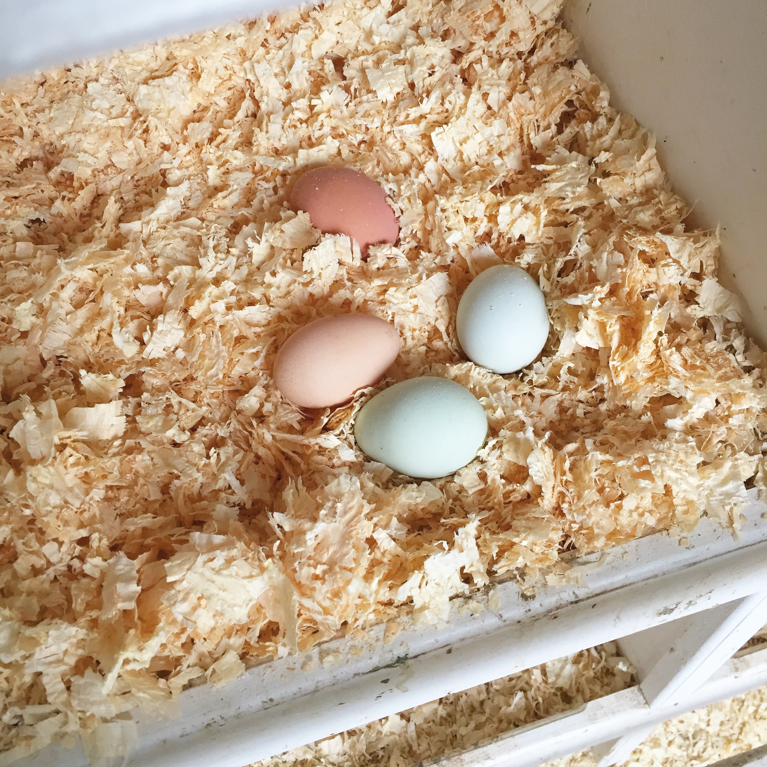 Happenings this week- eggs