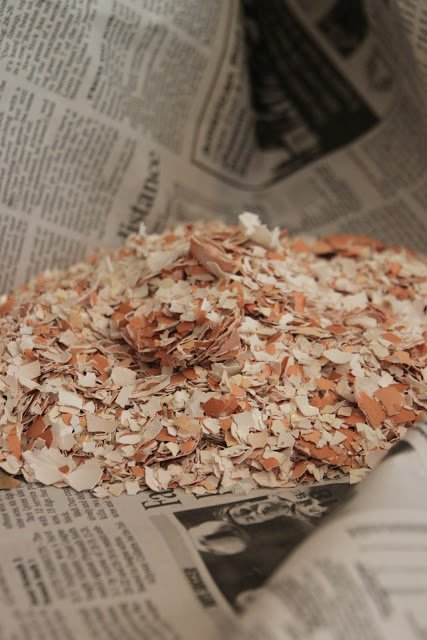 recycling chicken eggshells