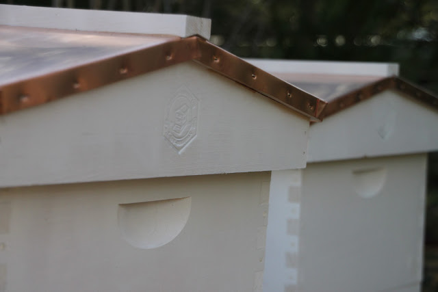 placement beehives