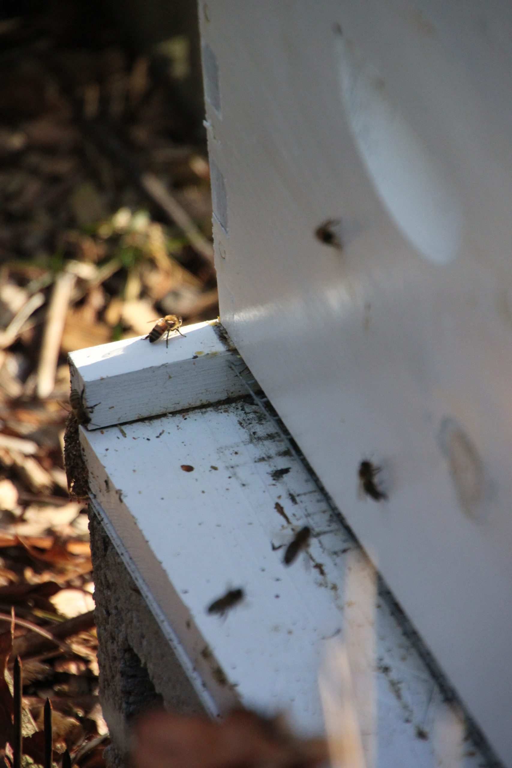 bees emerged from the hive