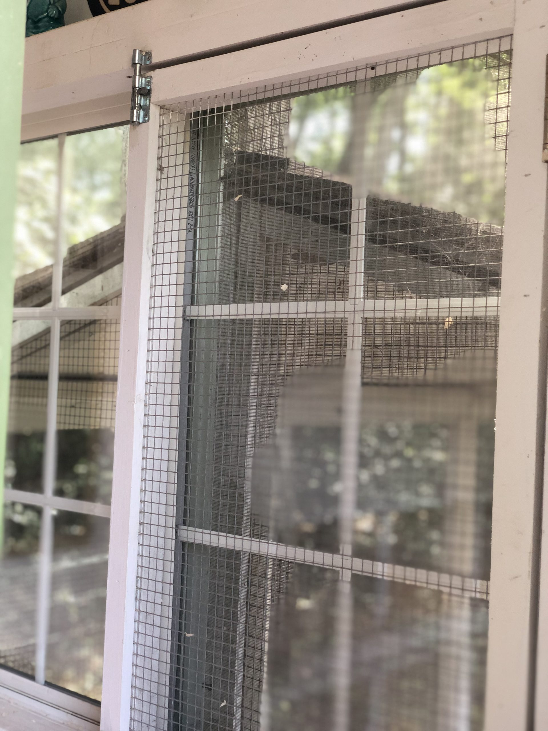 hardware cloth covers the chicken coop window to prevent backyard chicken predators