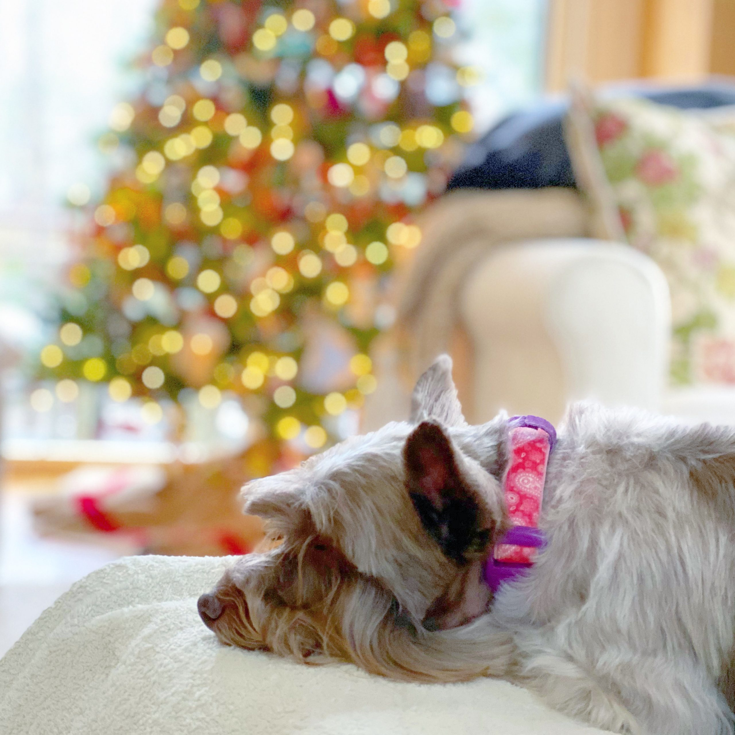 Thirty Little Things- dog with Christmas tree