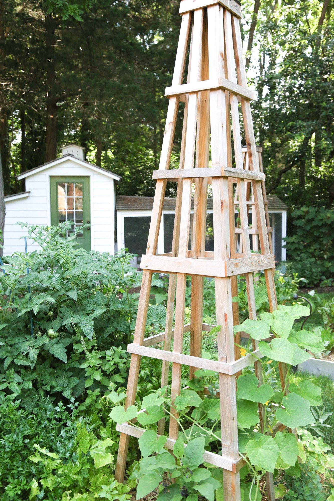 Tillys Nest- obelisk in garden for trellis