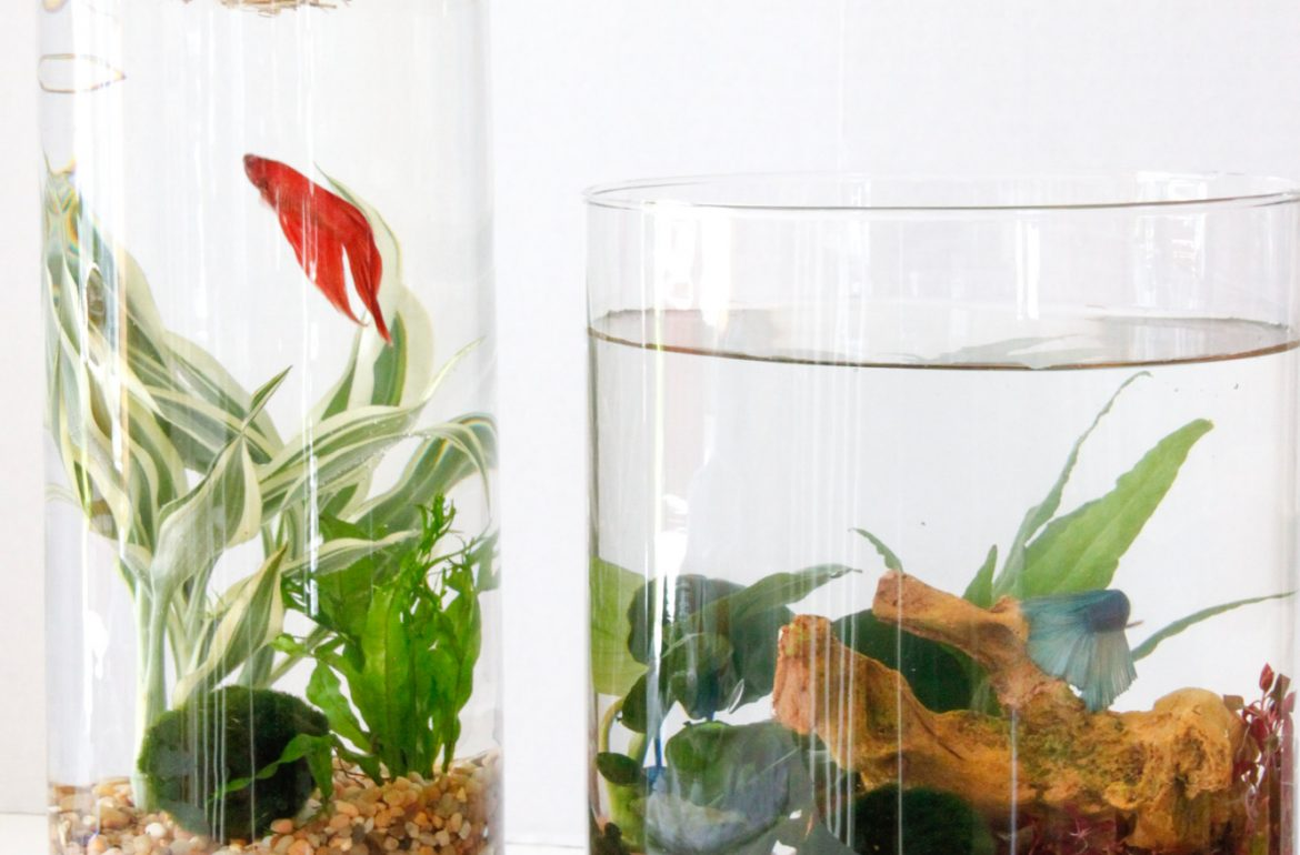 Diy indoor water garden tillys nest workwithnaturefo