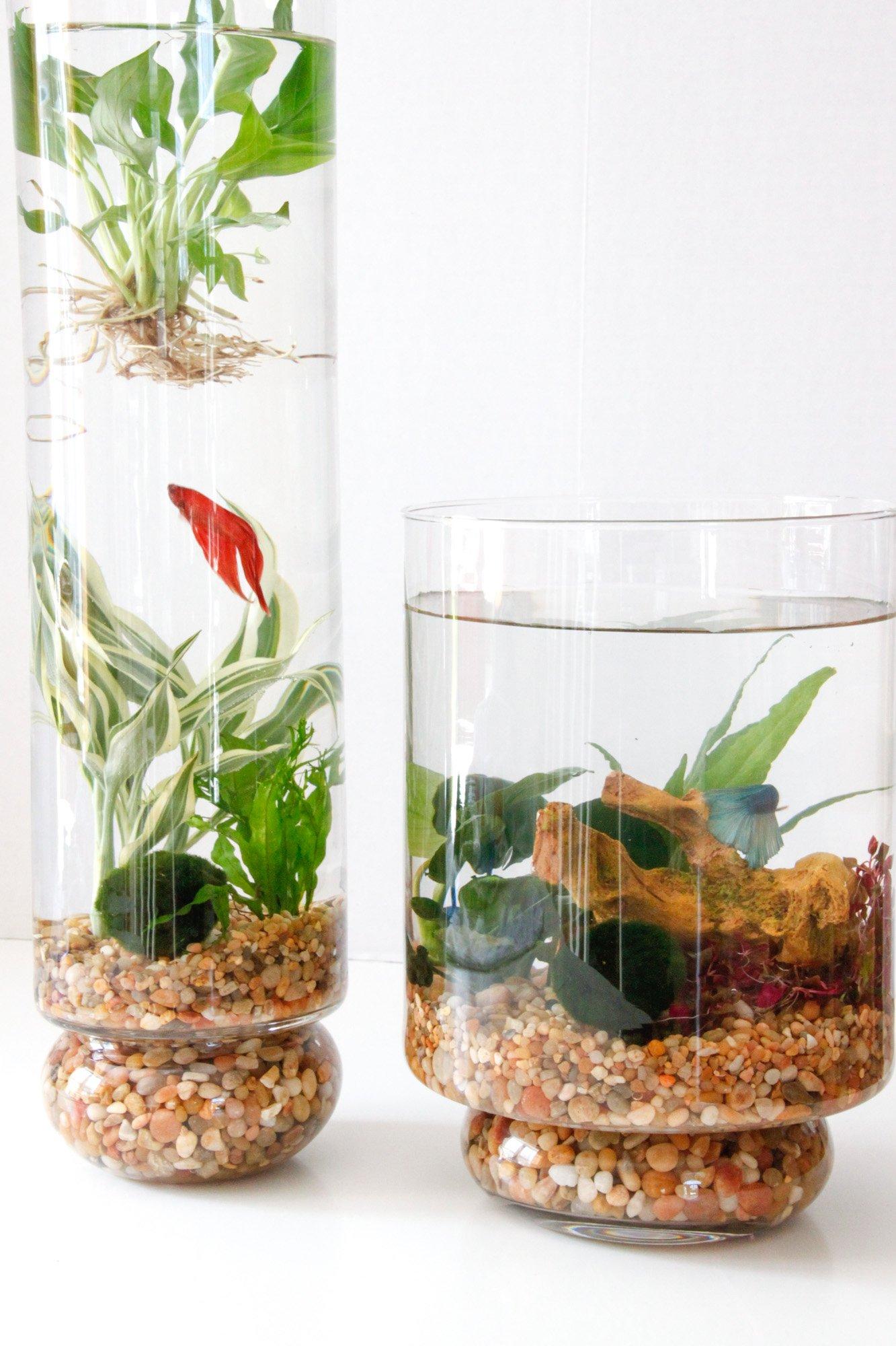 DIY Indoor Water Garden   Tilly's Nest