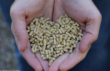 Original_Caughey-Melissa-Purina organic heart