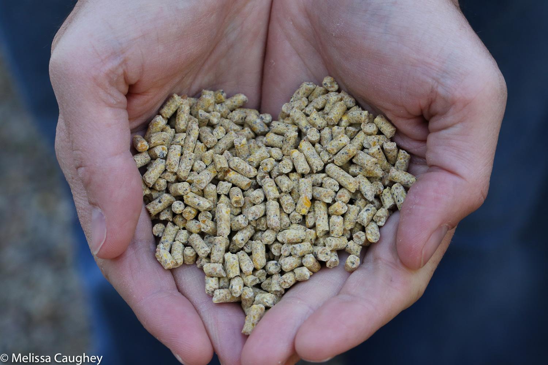 Original_Caughey-Melissa- Purina organic heart