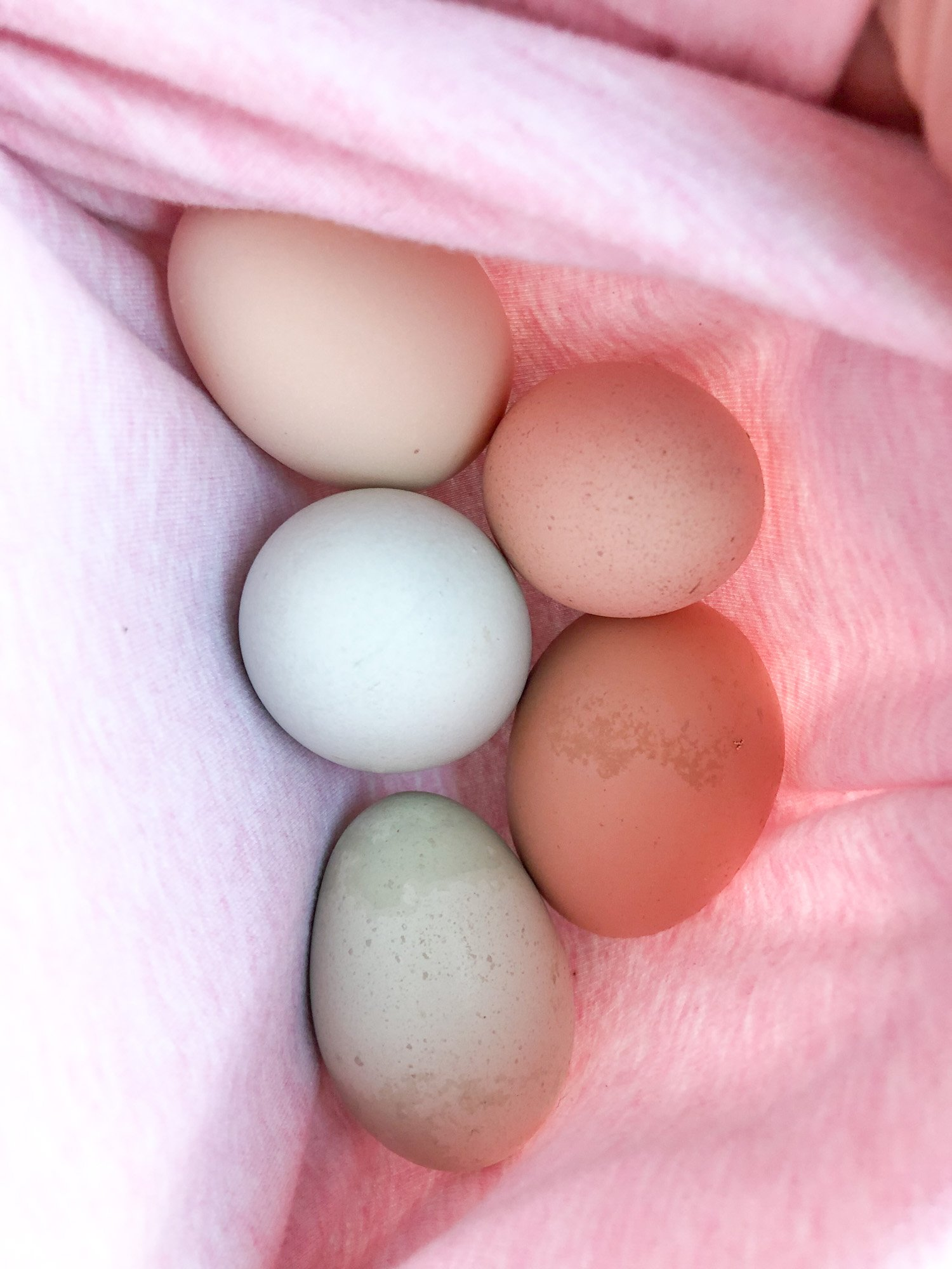 spring's promises- eggs in a makeshift shirt basket- TillysNest