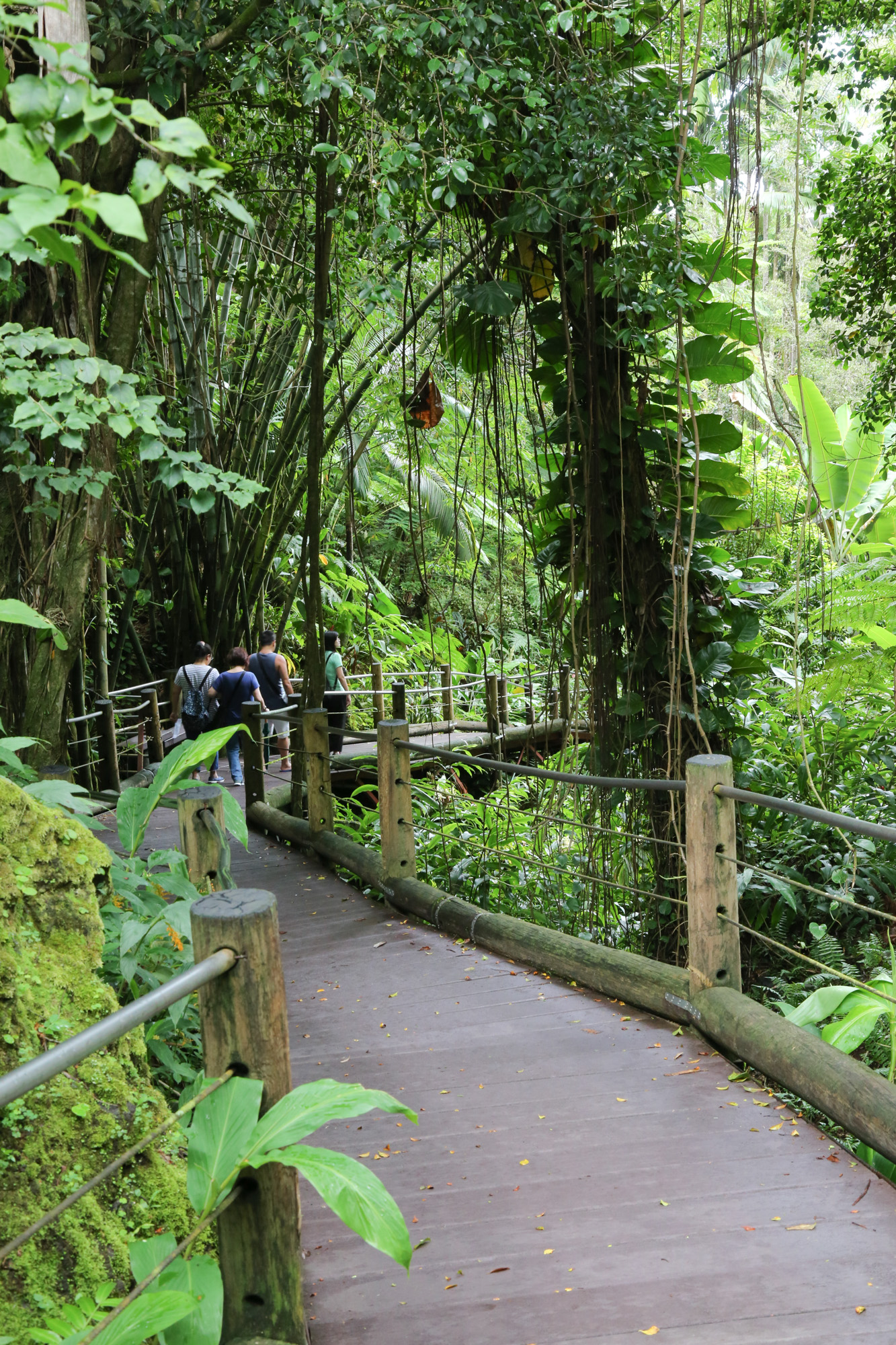 original_caughey-melissa-hawaii-garden-boardwalk-entry