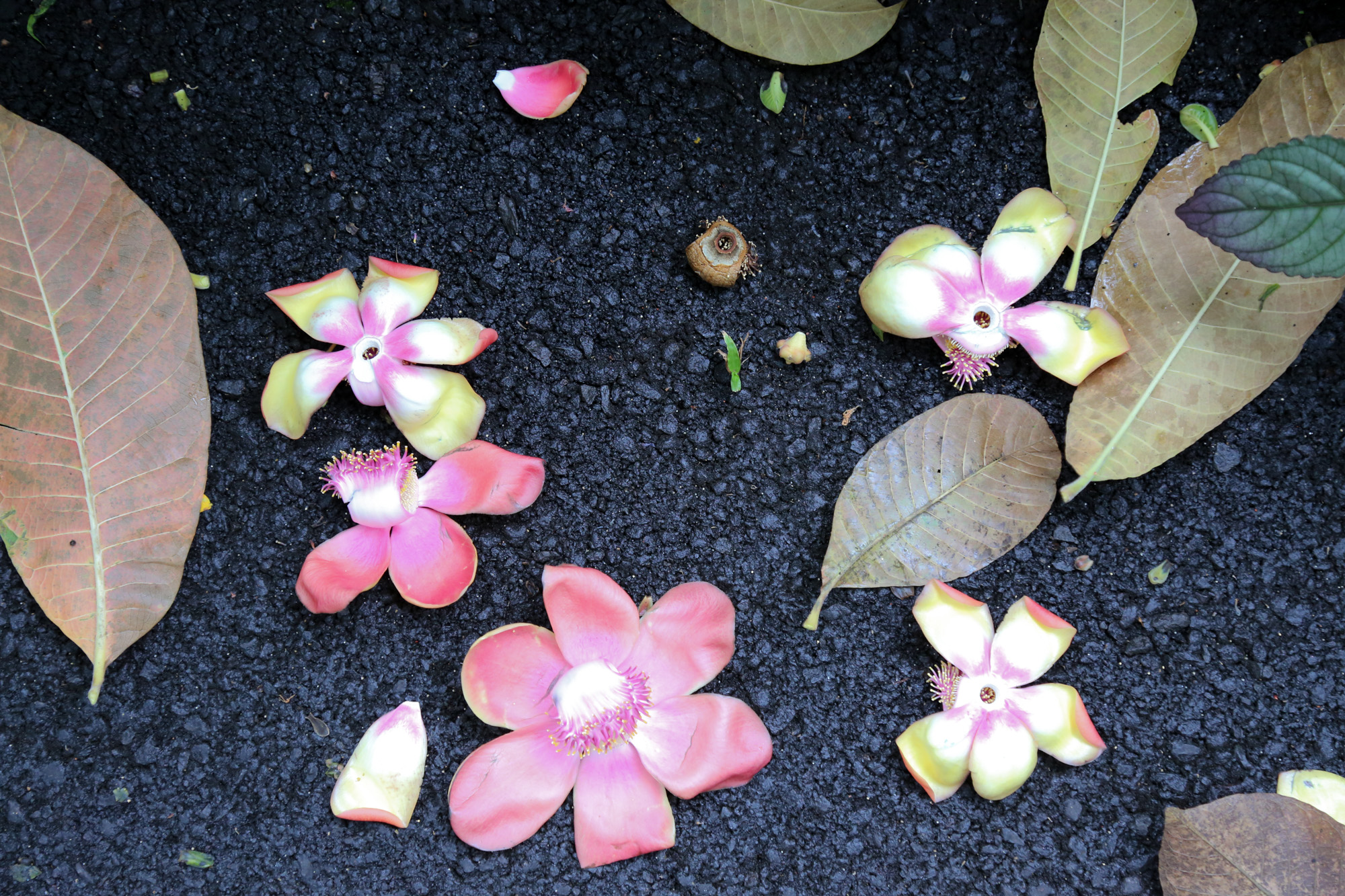 original_caughey-melissa-hawaii-garden-fallen-orchids