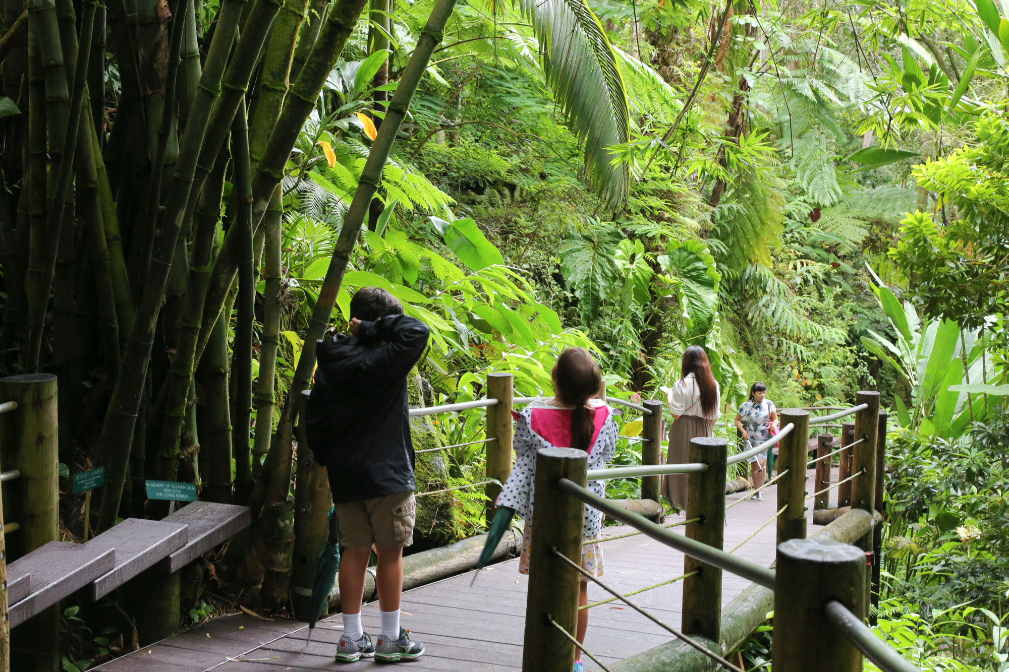 original_caughey-melissa-hawaii-garden-kids-boardwalk-entry