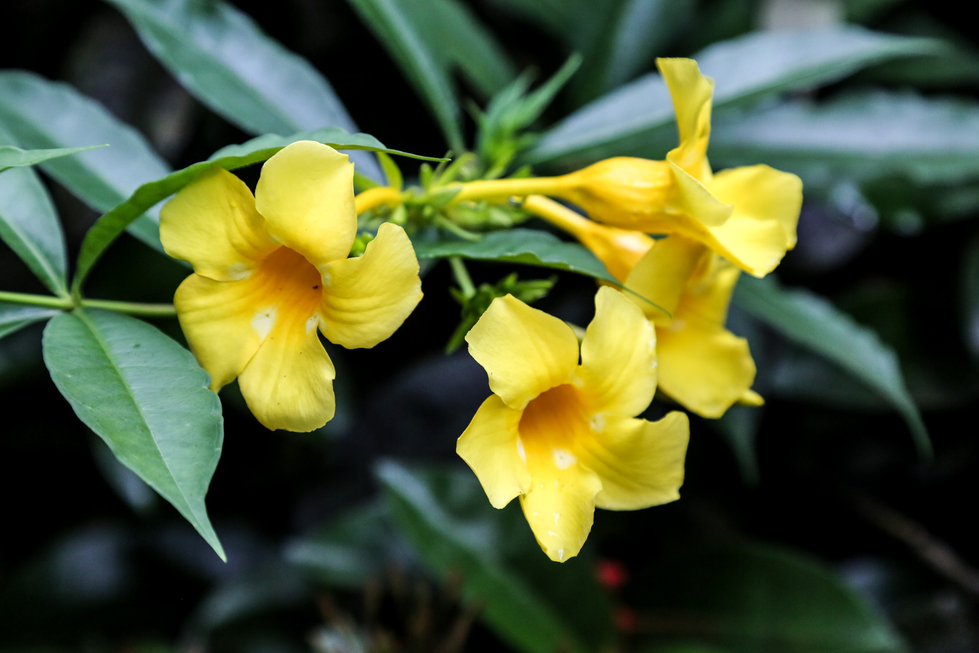 original_caughey-melissa-hawaii-garden-orchid-11-_