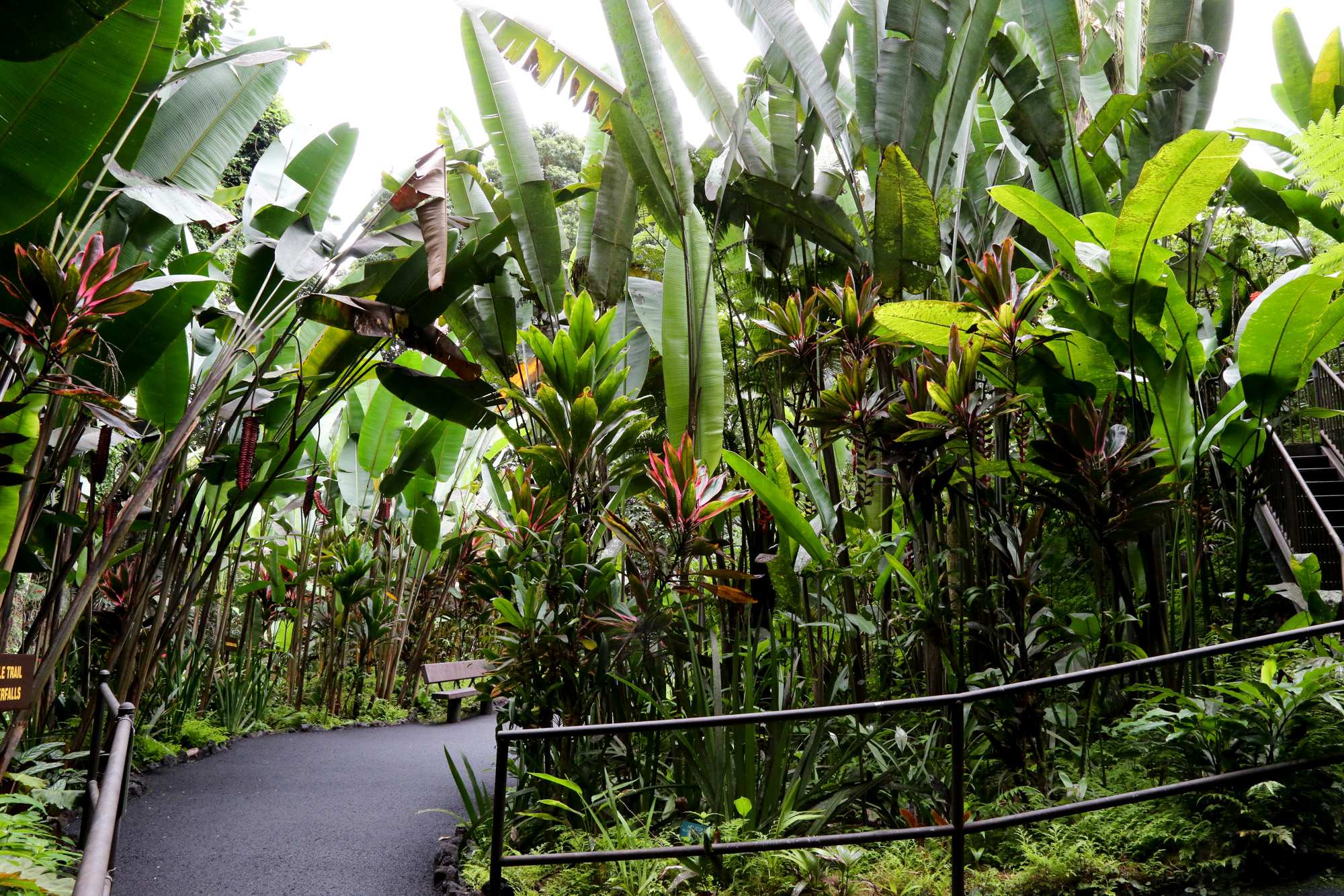original_caughey-melissa-hawaii-garden-palm-forest