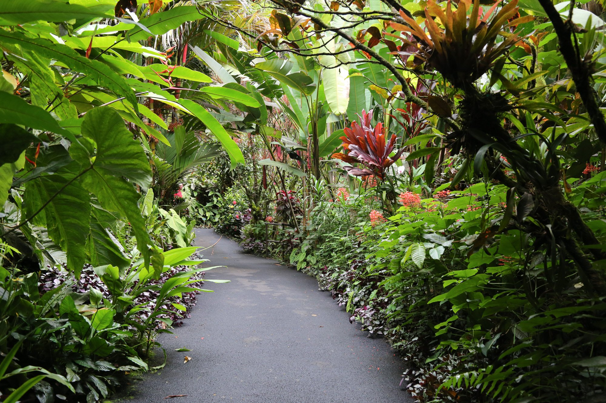 original_caughey-melissa-hawaii-garden-walkway_
