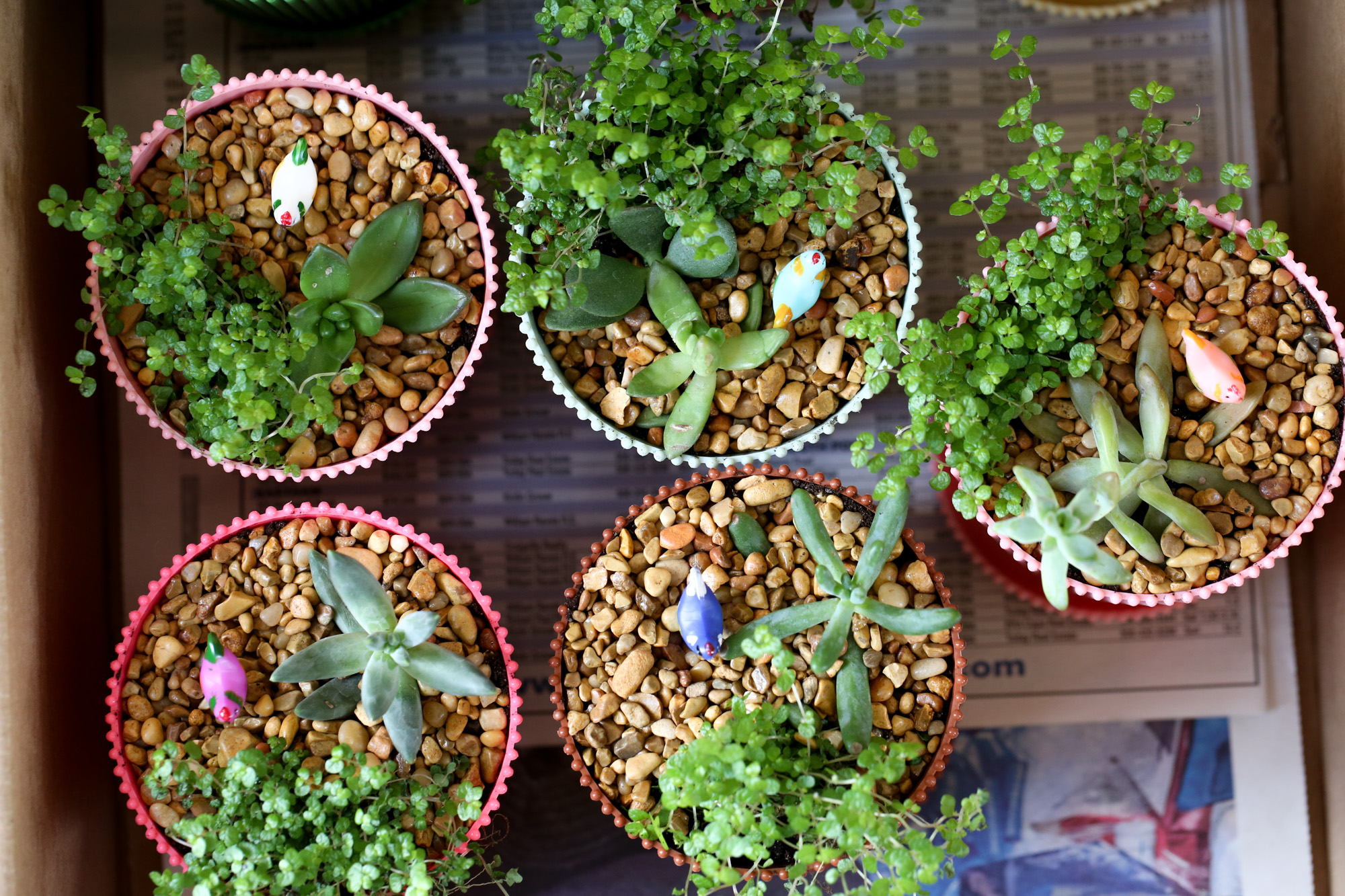 Miniature Chicken Garden