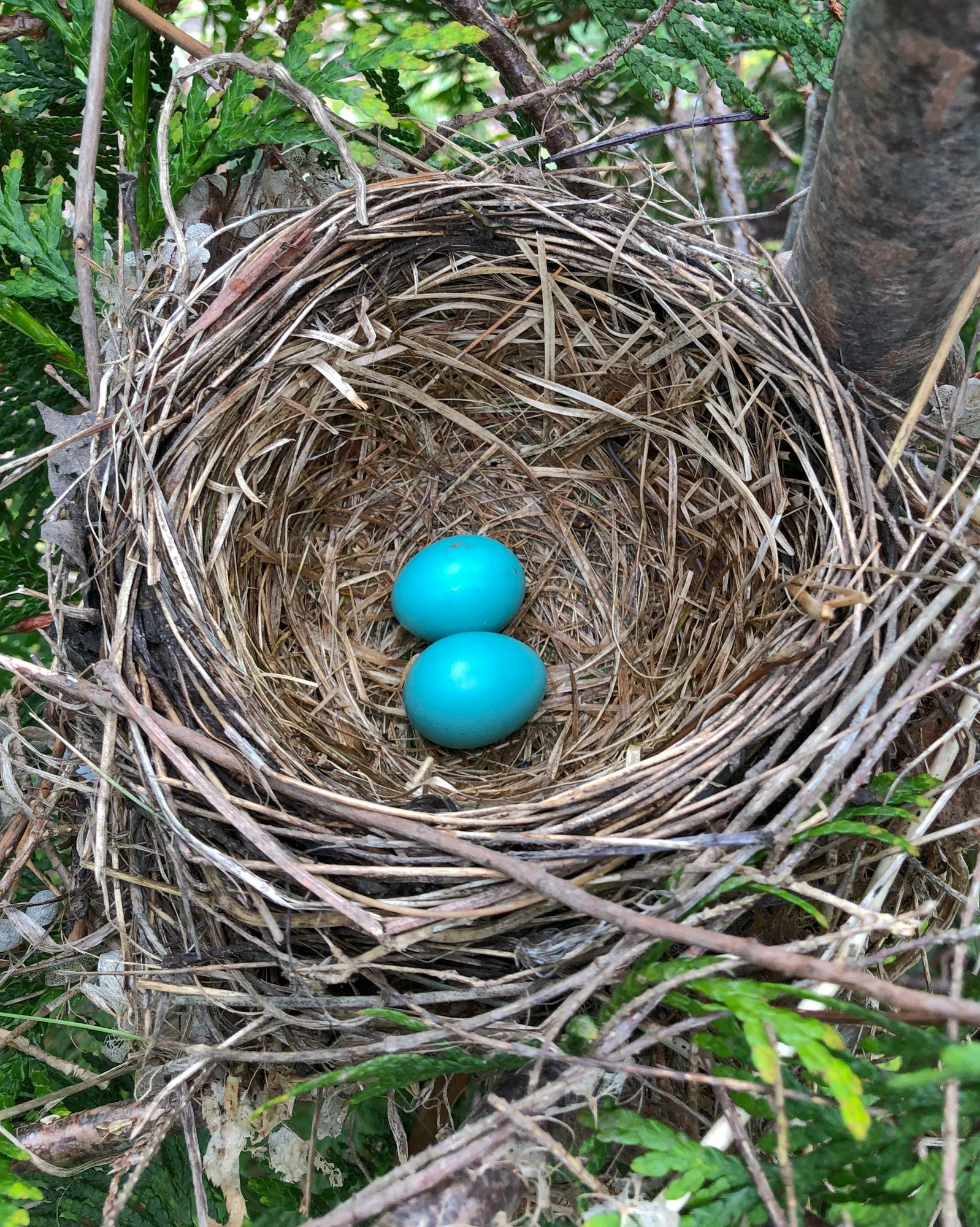 spring robin nest Tillys Nest
