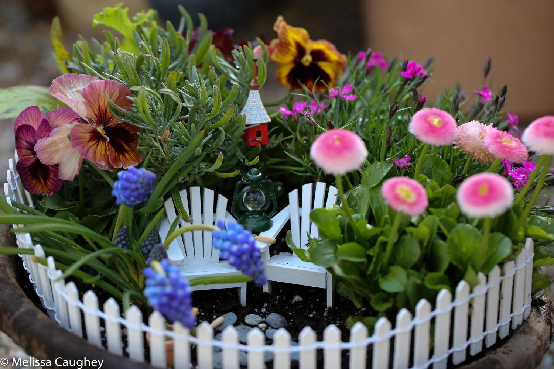 Original_Caughey-Melissa- miniature garden1
