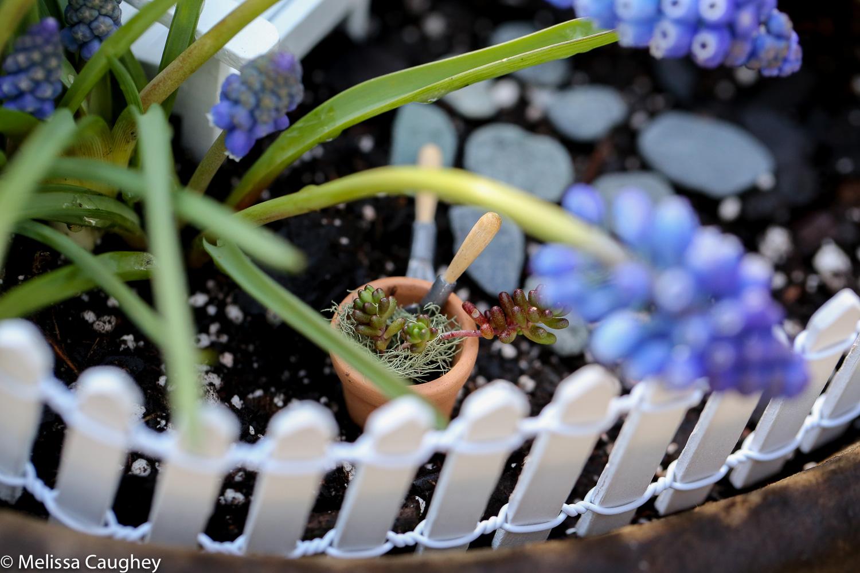 Original_Caughey-Melissa-springtime fairy garden3