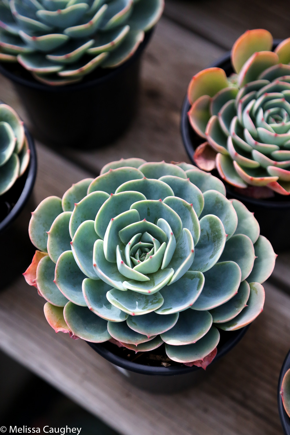 Original_Caughey-Melissa-succulent1 plants speak