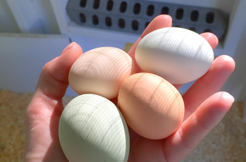 Original_Caughey-MelissaCaughey-eggs in hand