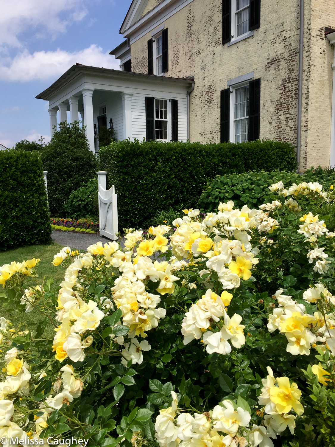 Original_Caughey-MelissaCaughey-garden2grow-sideentryyellowroses