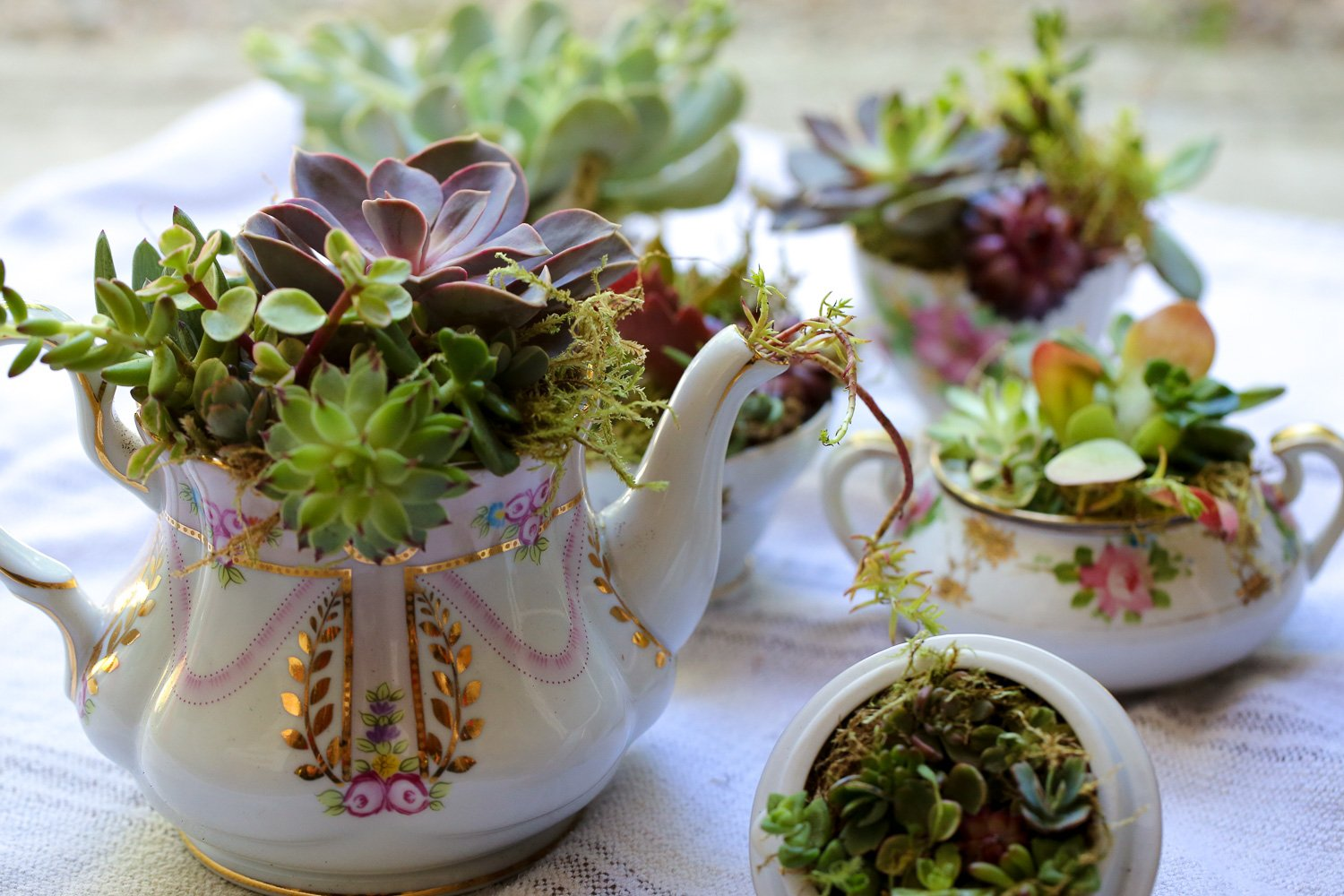 Original_Caughey-MelissaCaughey- succulent tea party tablescape