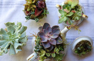 Original_Caughey-MelissaCaughey-succulent tea party 2