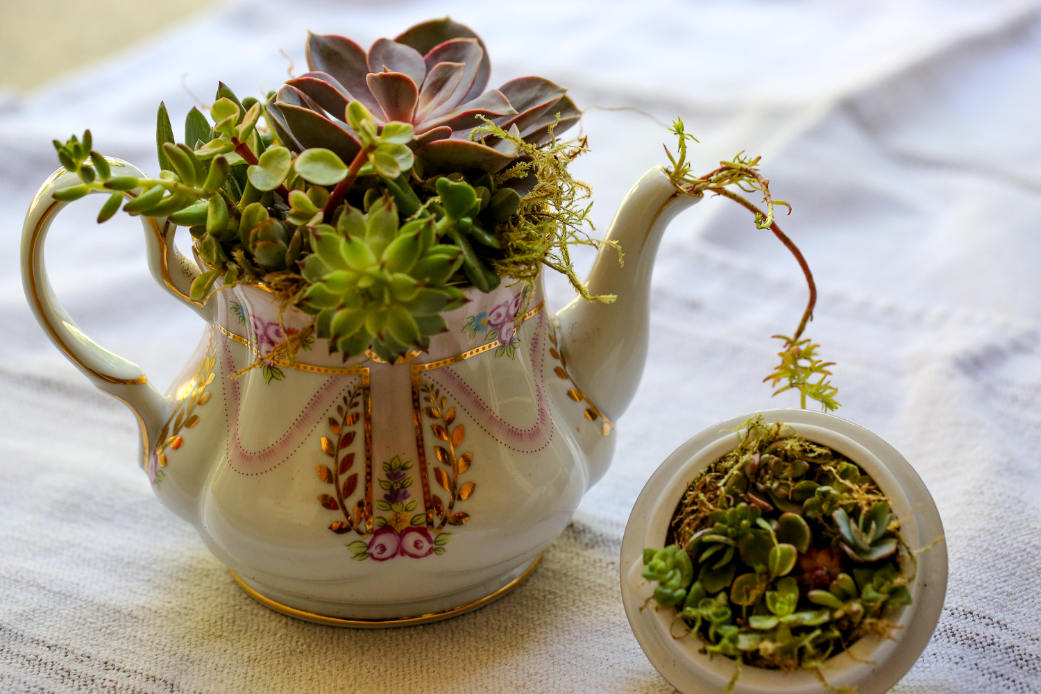 Original_Caughey-MelissaCaughey-succulent tea party 3