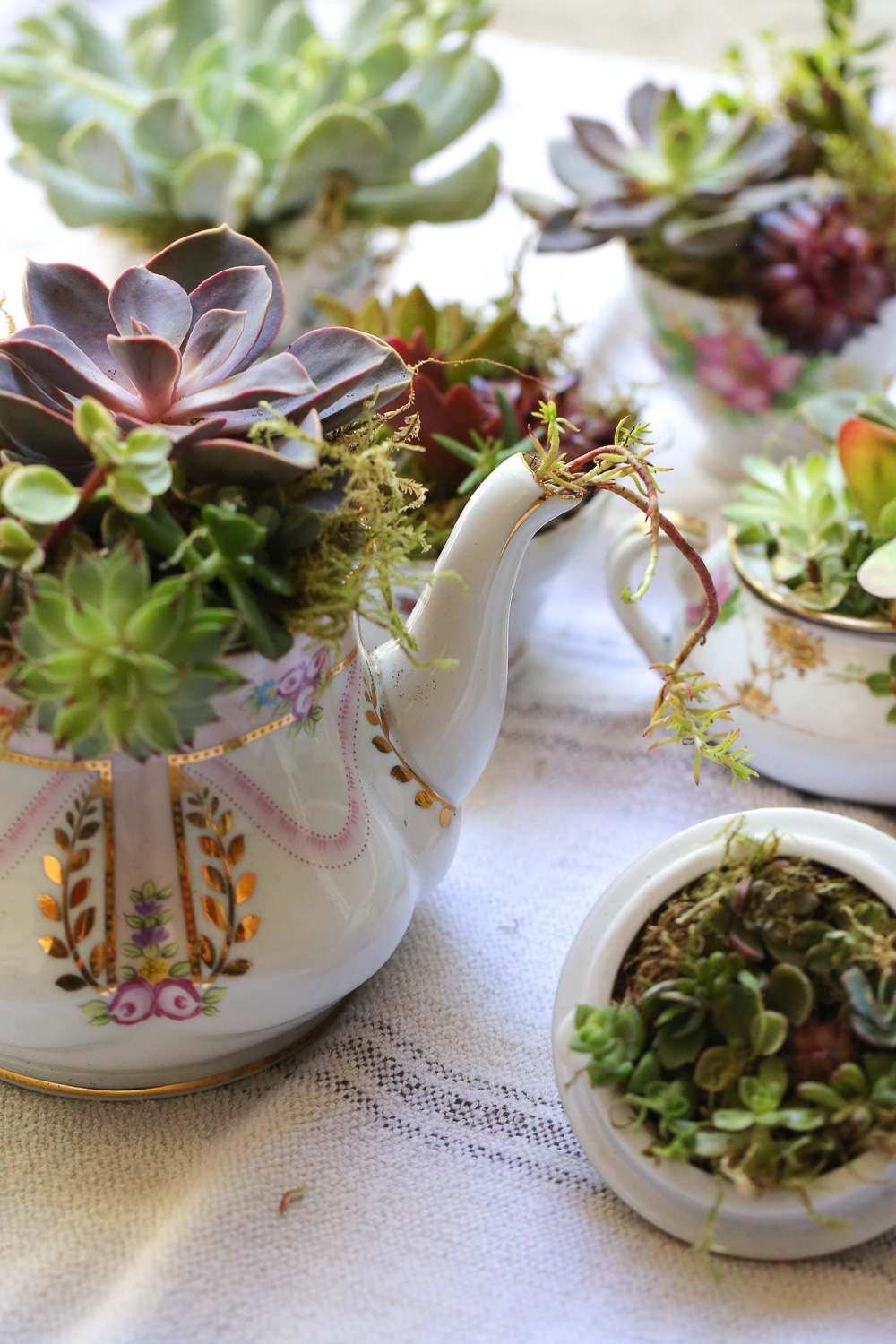 Original_Caughey-MelissaCaughey-succulent tea party 8