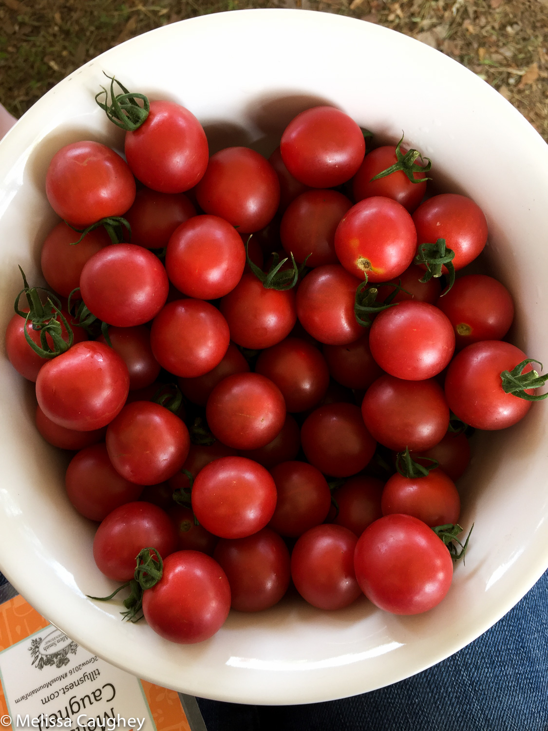 Original_Caughey-MelissaCaugheygarden2grow-tomatoes