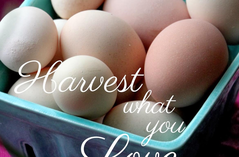 Tillys-Nest-Harvest-what-you-love