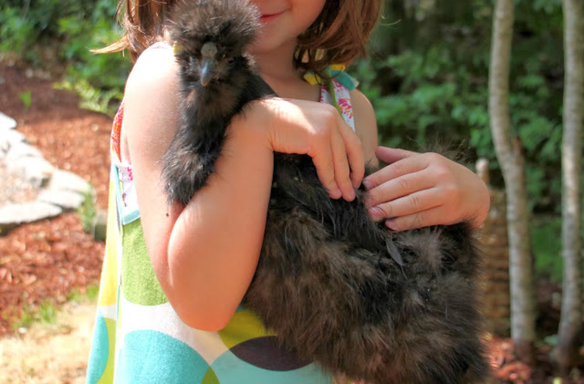 Tillys-Nest-Silkie-with-daughter