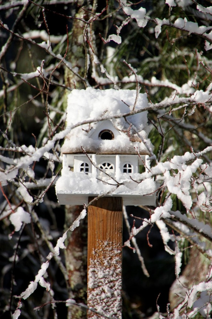 Tilly's Nest- birdhouse snow chilly winter weather