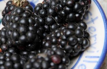 Tillys-Nest-blackberries