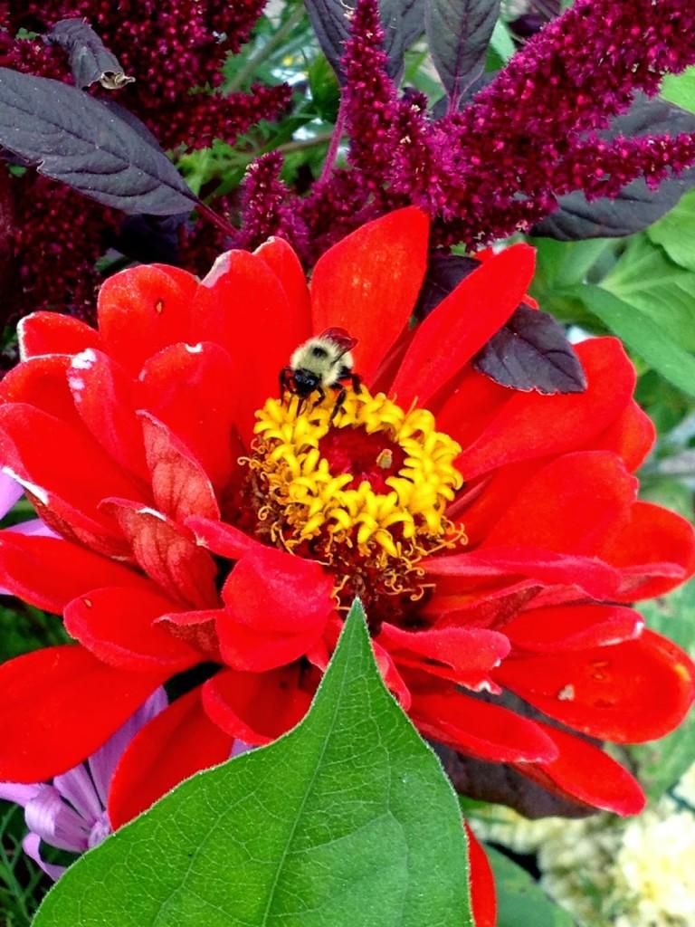 honeybee bumblebee differences